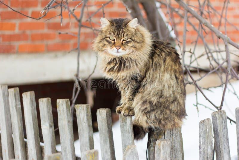 Gato cinzento macio grande que senta-se na cerca fotografia de stock