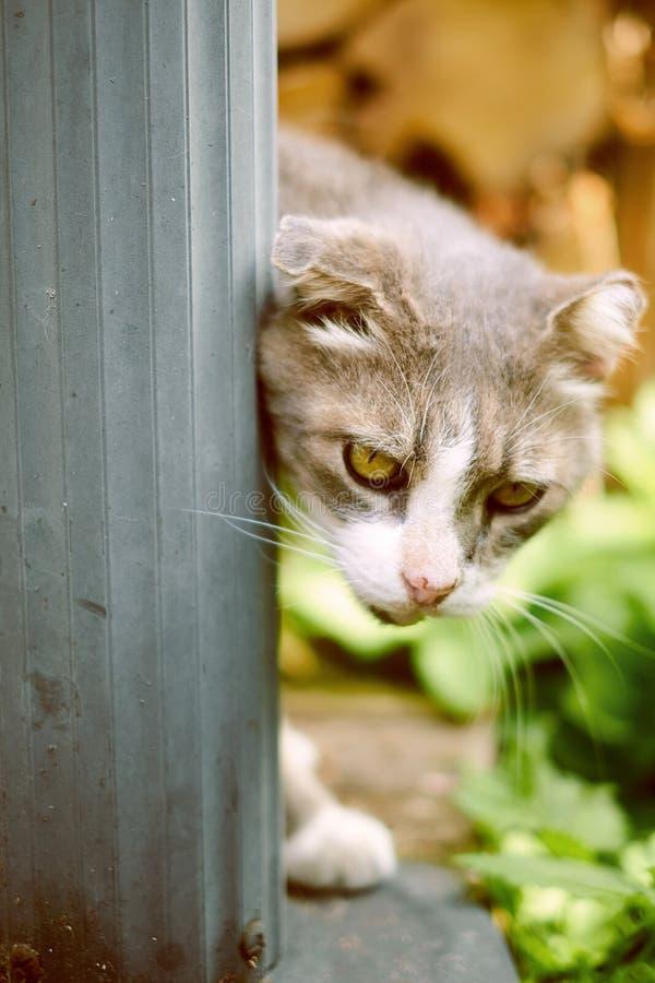 Gato cinzento na jarda imagens de stock