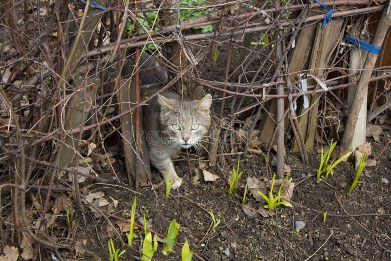 Gato cinzento que espreita da cerca imagem de stock royalty free