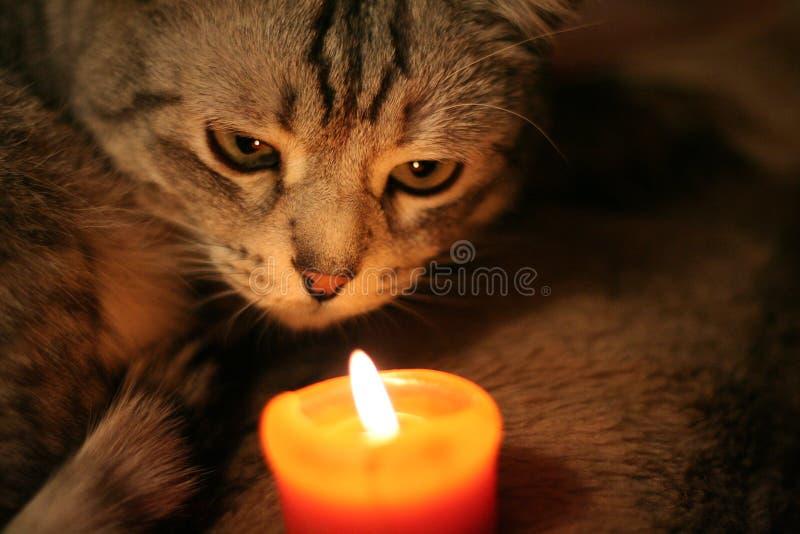 Gato cinzento que olha a vela imagem de stock royalty free