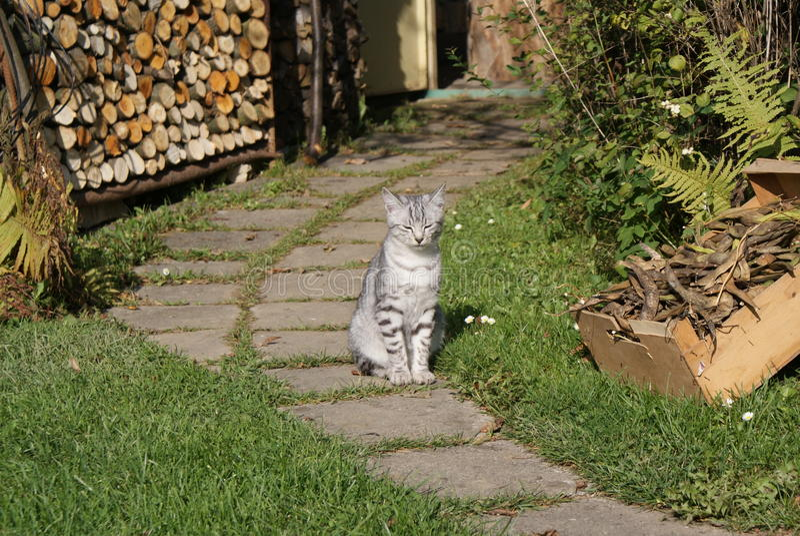 Gato cinzento que senta-se no jardim fotografia de stock royalty free