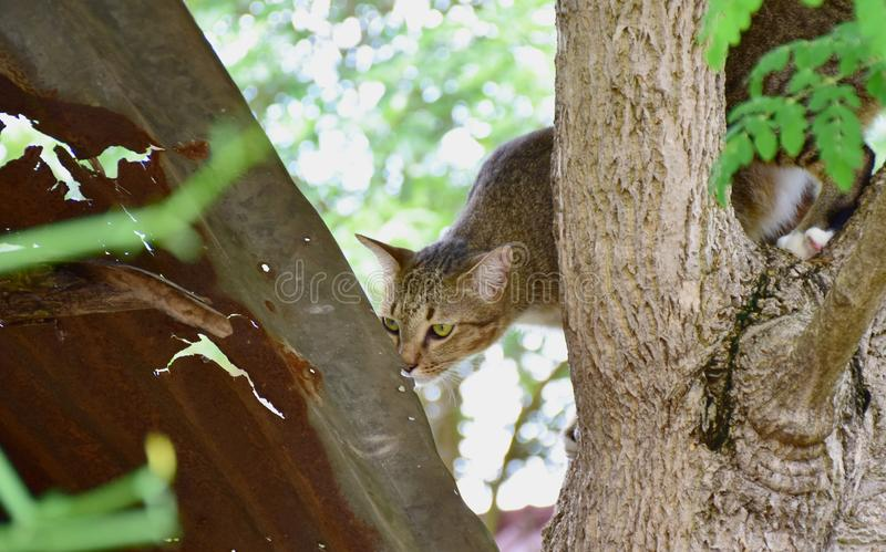 Gato cogido en el árbol imagen de archivo libre de regalías