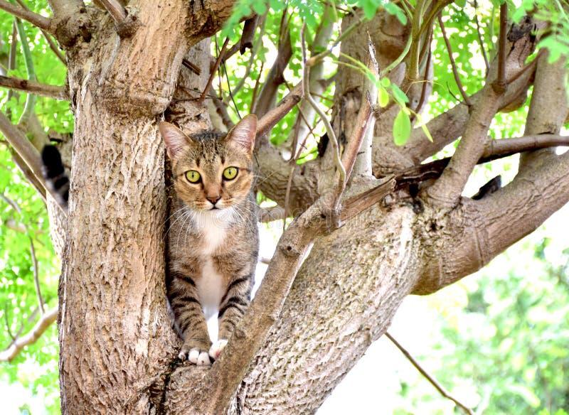 Gato cogido en el árbol imagenes de archivo