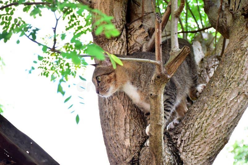 Gato cogido en el árbol imágenes de archivo libres de regalías