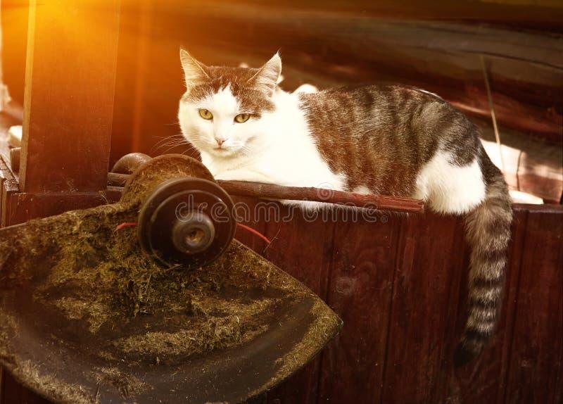 Gato colocado no patamar de madeira da casa de campo fotos de stock