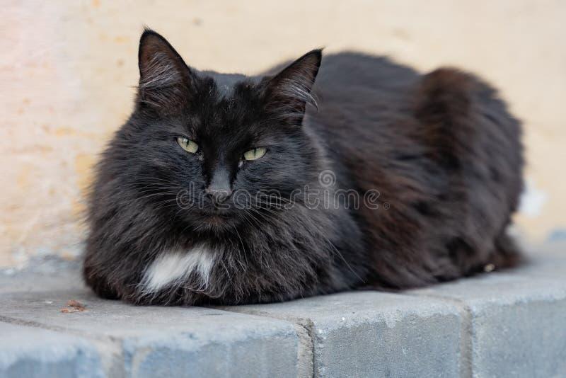 Gato colorido que encontra-se no passeio na rua imagem de stock