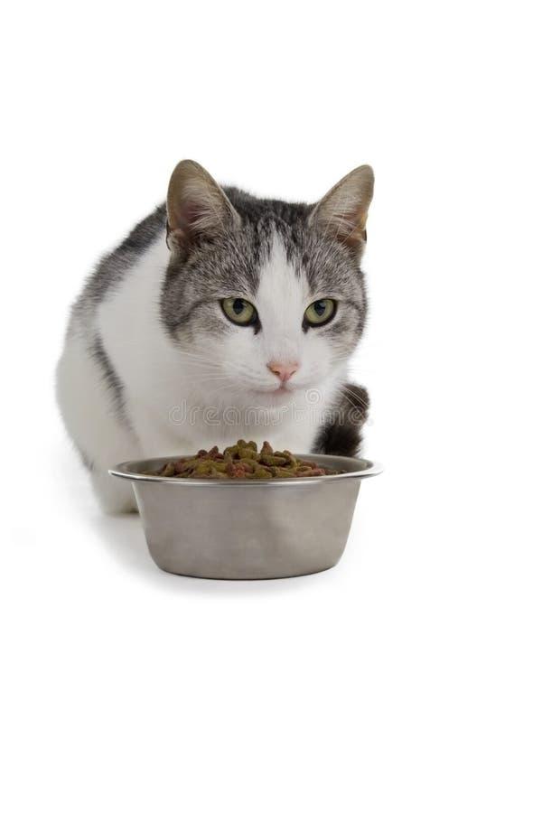 Gato com alimentos da bacia imagem de stock royalty free