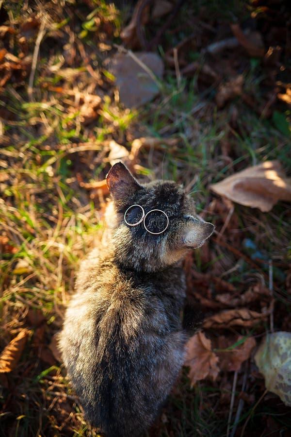 Gato com anéis de casamento fotografia de stock