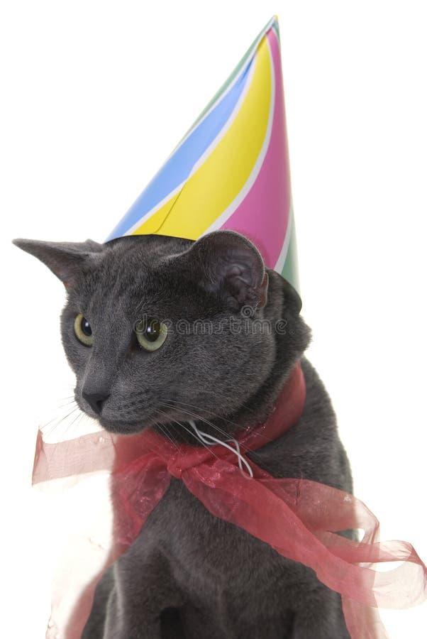 Gato com chapéu e a fita birday imagens de stock royalty free