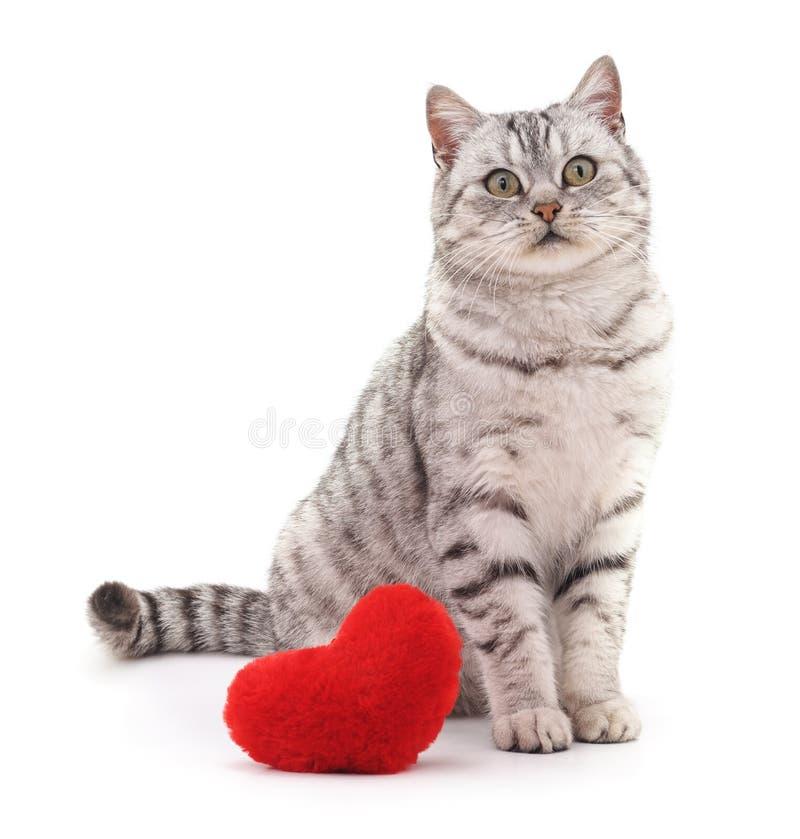 Gato com coração do brinquedo fotografia de stock