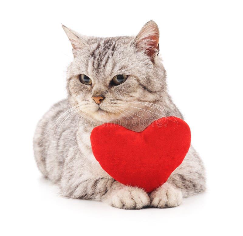 Gato com coração do brinquedo imagens de stock