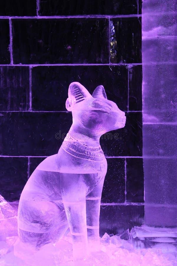 Gato com a decoração feita do gelo imagem de stock