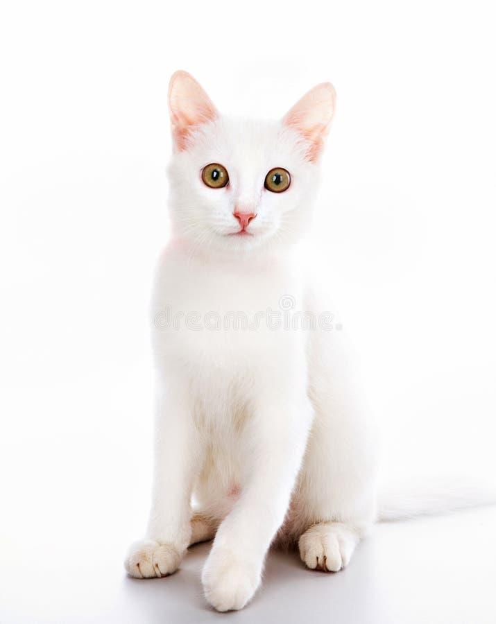 Gato com fita fotos de stock royalty free