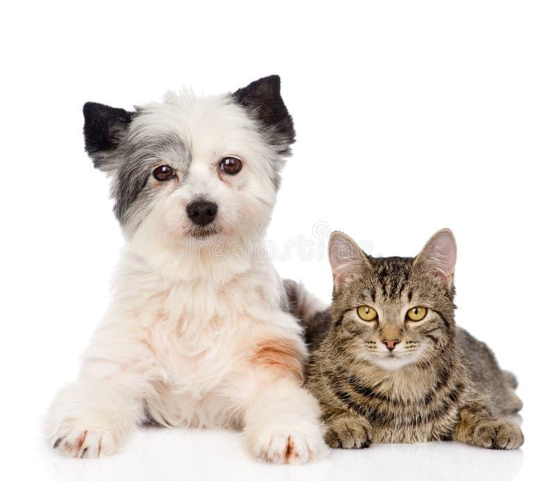 Gato com o cão que olha a câmera junto Isolado no branco fotos de stock