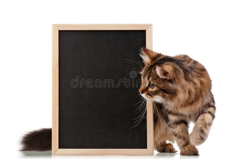 Gato com quadro-negro fotos de stock