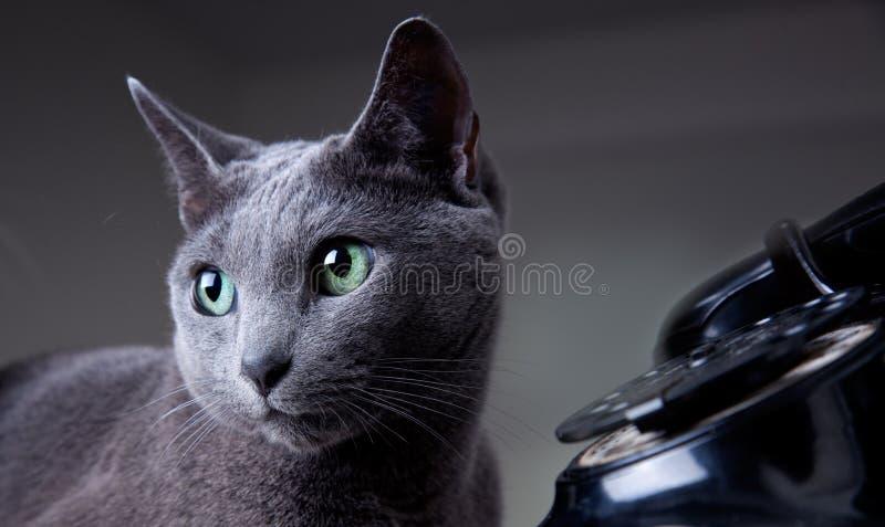 Gato com telefone antigo fotos de stock