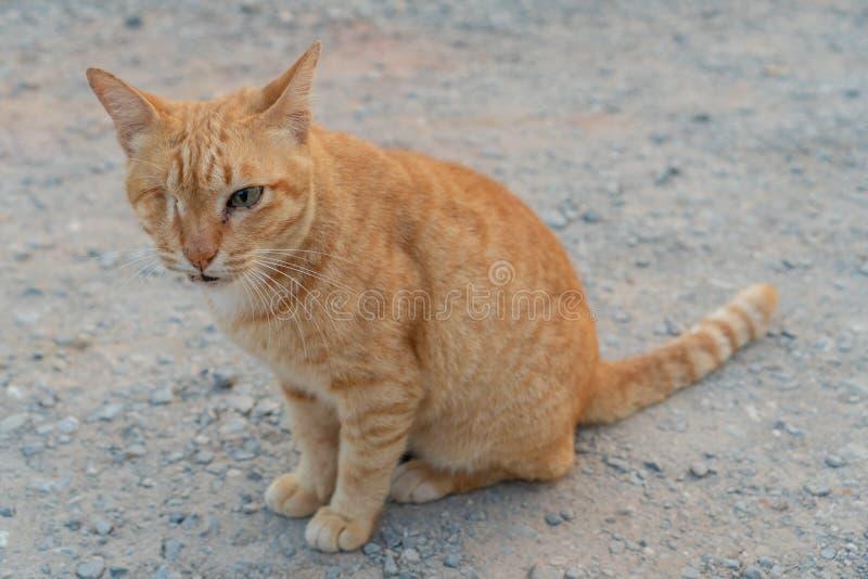 Gato com um só olho vermelho na rua fotografia de stock