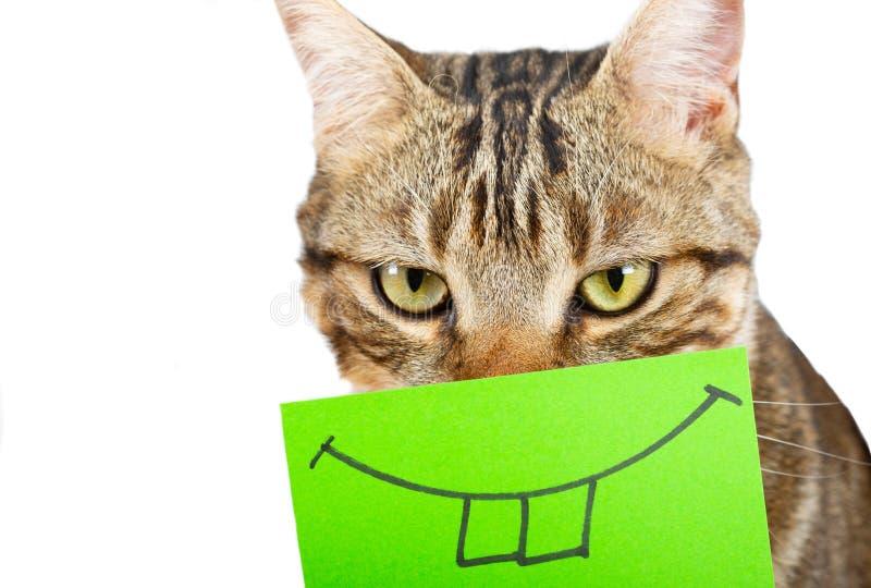 Gato com um sorriso fotografia de stock royalty free