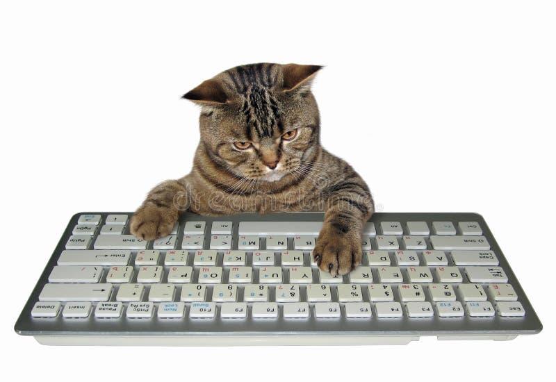 Gato com um teclado branco fotografia de stock royalty free