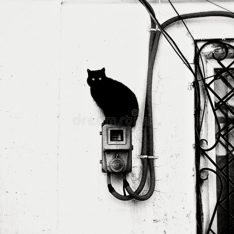 Gato con dos colas foto de archivo libre de regalías