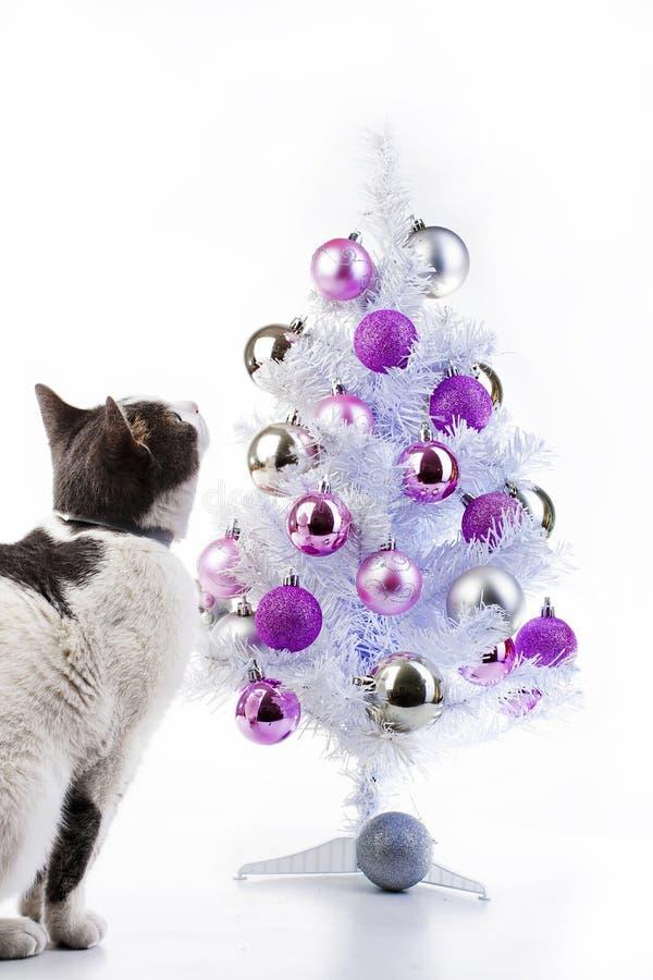 Gato con el árbol de navidad El gato nacional quiere jugar con el gato de la chuchería del árbol de navidad que juega con Navidad imagenes de archivo