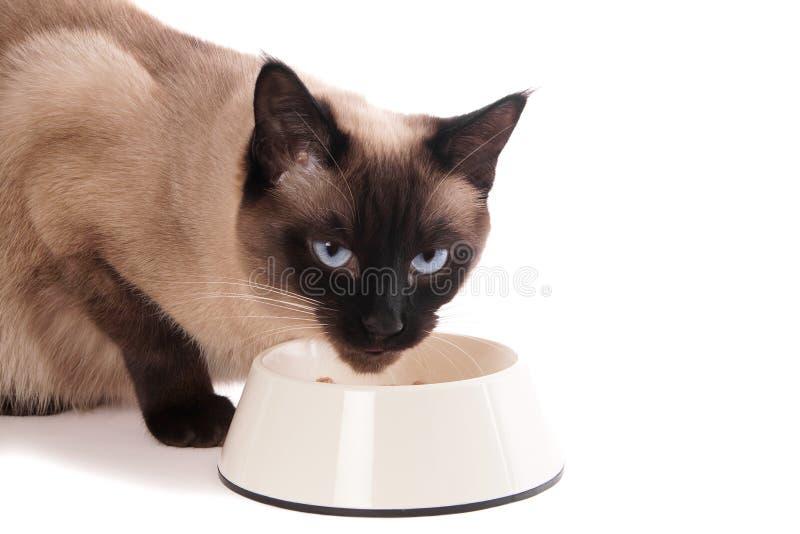 Gato con el cuenco de alimentación imagen de archivo libre de regalías