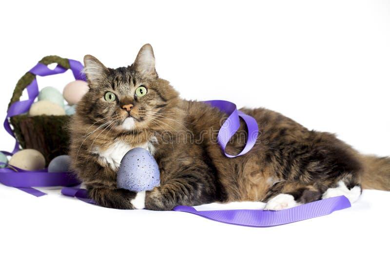 Gato con el huevo de Pascua fotos de archivo
