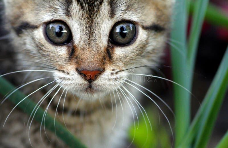 Gato con el ojo grande imagenes de archivo