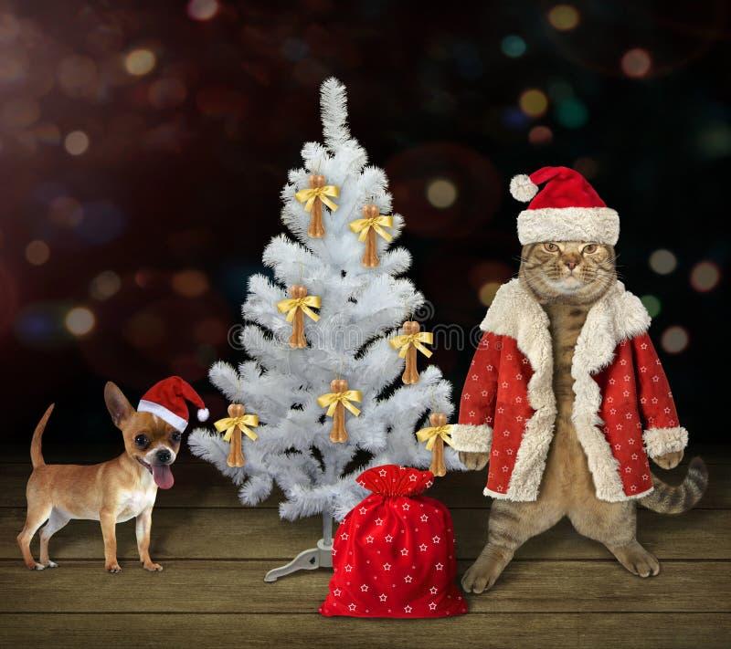 Gato con el perro cerca del árbol de navidad blanco imagen de archivo