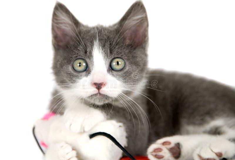 Gato con el ratón fotos de archivo libres de regalías