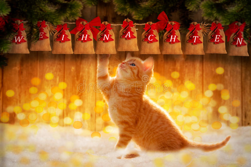 Gato con el saco de la Navidad/el calendario del advenimiento imágenes de archivo libres de regalías