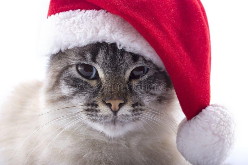 Gato con el sombrero de Santa Claus aislado en el fondo blanco imagen de archivo libre de regalías