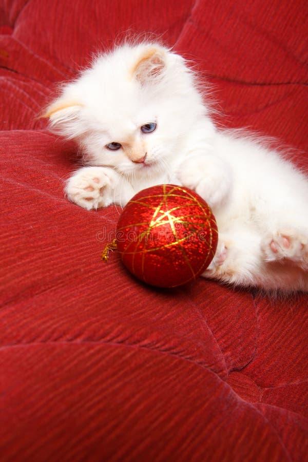 Gato con la bola de la Navidad foto de archivo