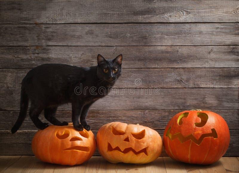 gato con la calabaza anaranjada de Halloween en fondo de madera imagen de archivo libre de regalías