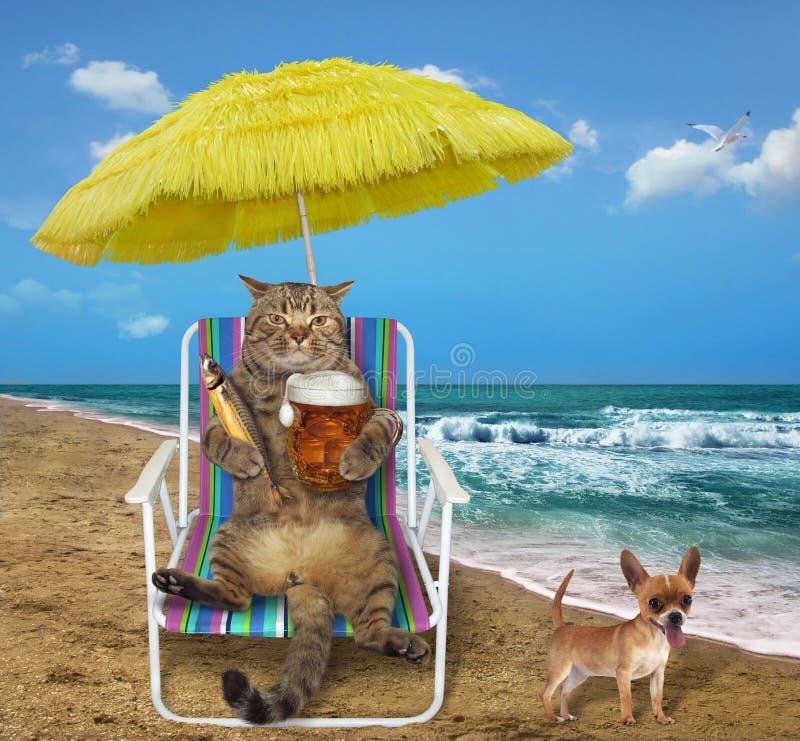 Gato con la cerveza en una silla de playa imágenes de archivo libres de regalías
