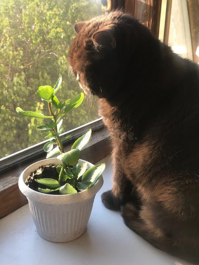Gato con la flor fotografía de archivo libre de regalías