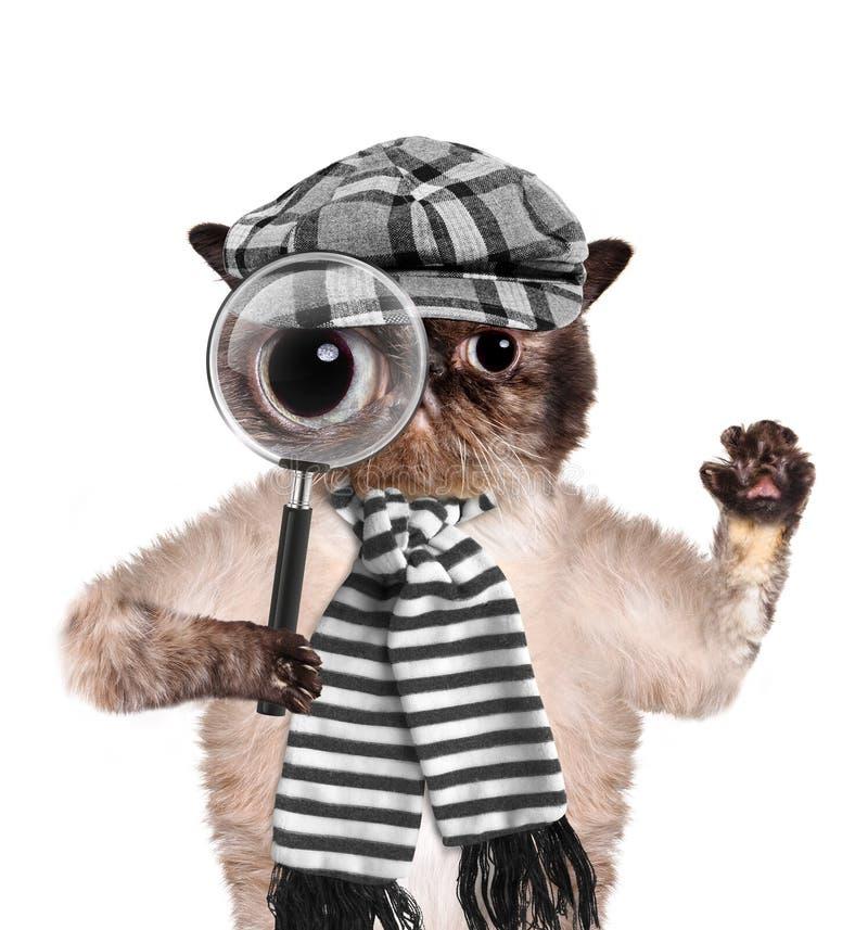 Gato con la lupa y la búsqueda foto de archivo