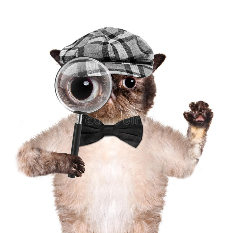 Gato con la lupa y la búsqueda imagen de archivo