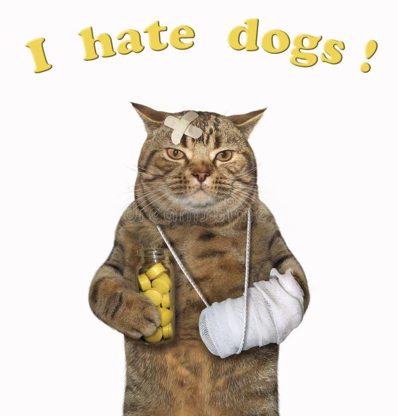 Gato con la pata vendada imagen de archivo libre de regalías
