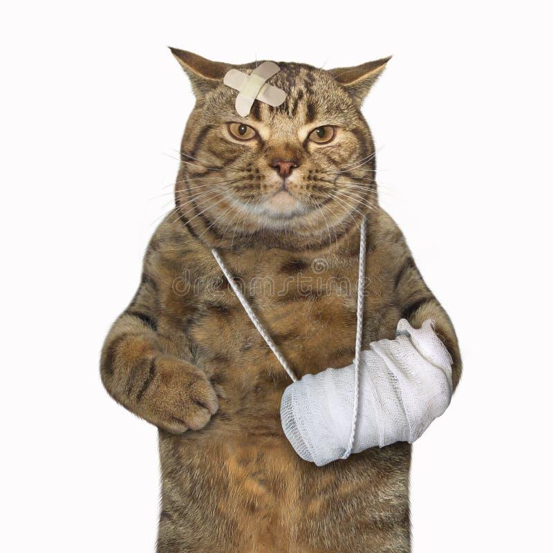 Gato con la pierna quebrada imagen de archivo