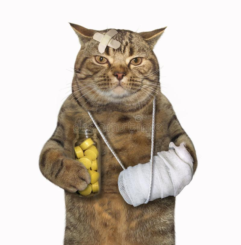 Gato con la pierna quebrada 2 imágenes de archivo libres de regalías