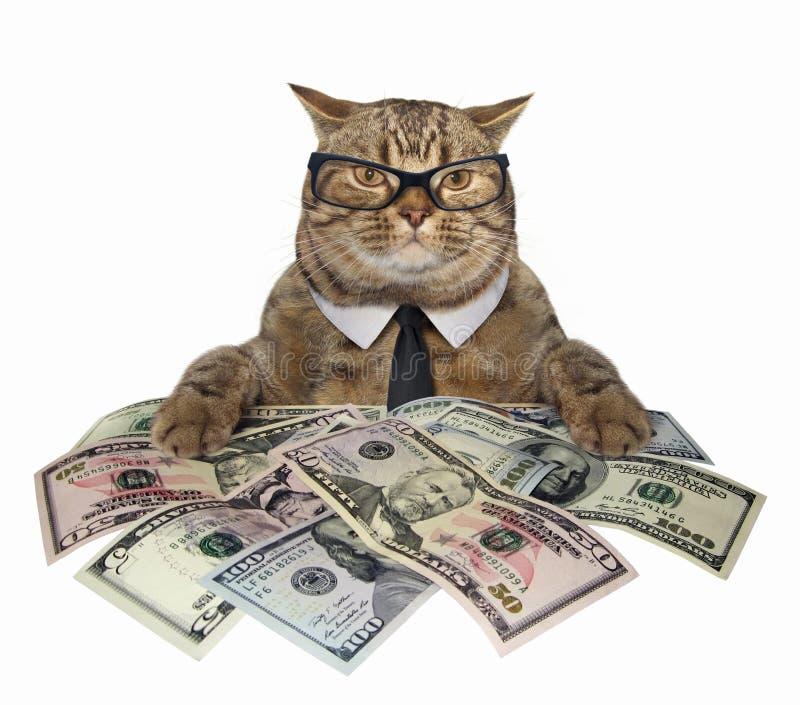 Gato con los dólares americanos 2 foto de archivo