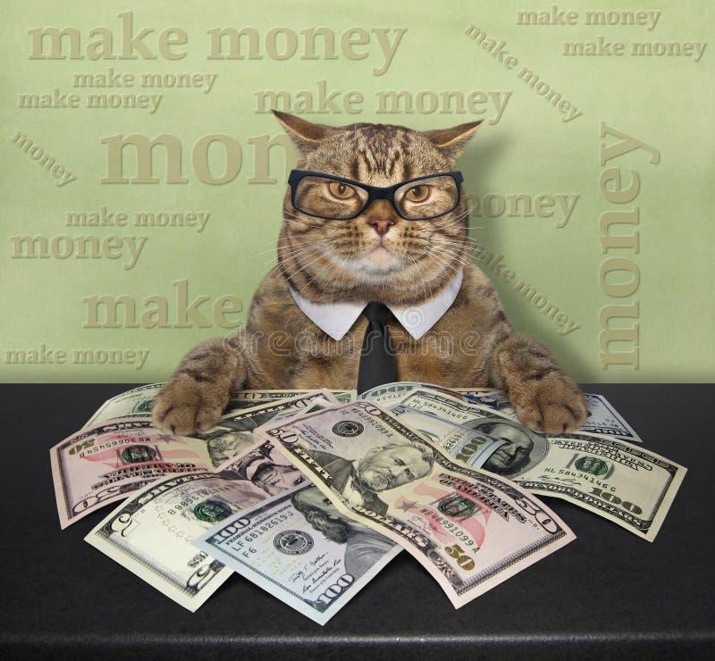 Gato con los dólares americanos 3 foto de archivo