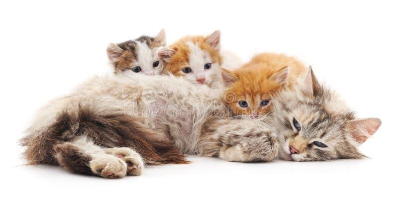 Gato con los gatitos imagen de archivo libre de regalías