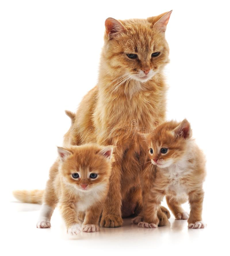 Gato con los gatitos foto de archivo