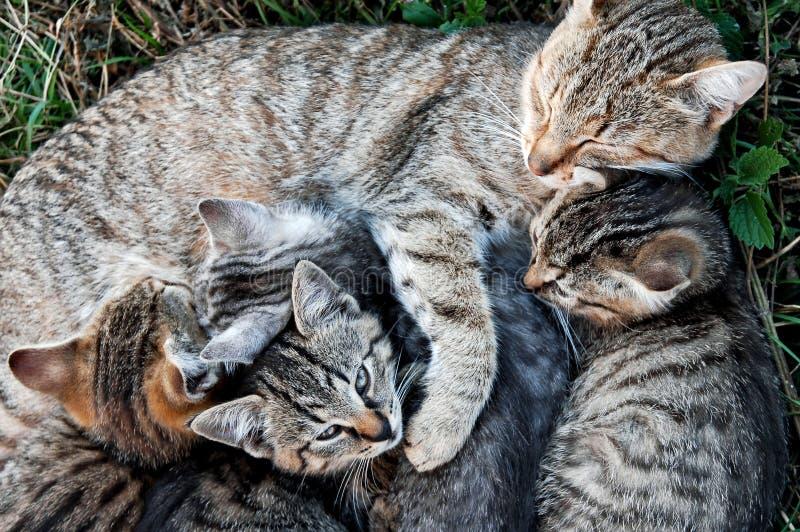 Gato con los gatitos fotos de archivo