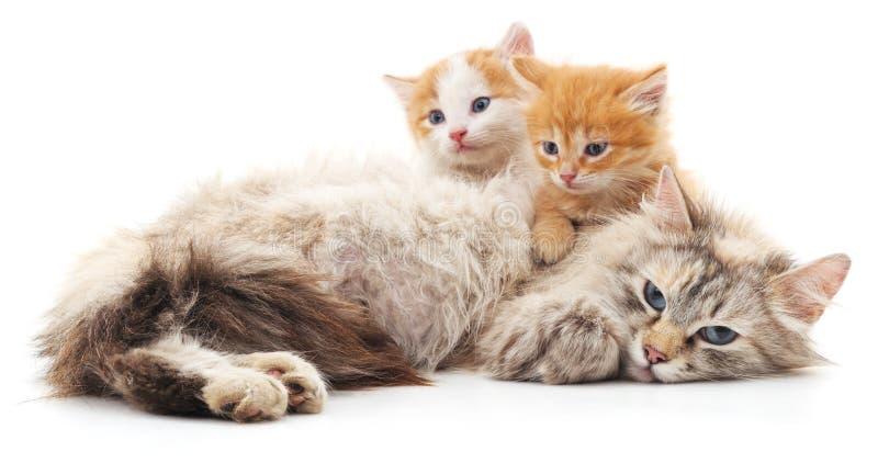 Gato con los gatitos fotos de archivo libres de regalías