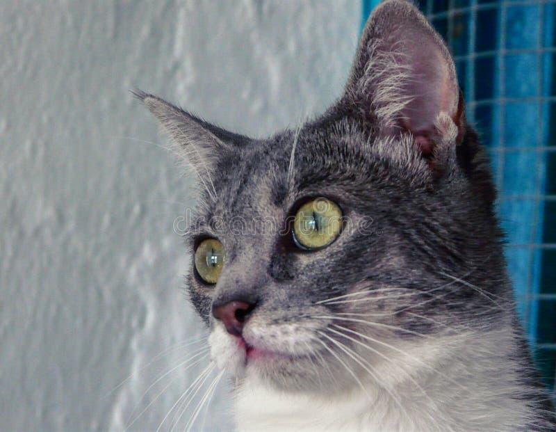 Gato con los ojos fijos imagenes de archivo