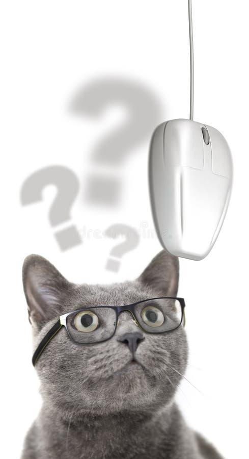 Gato con los problemas de la visión que miran el ratón del ordenador foto de archivo libre de regalías