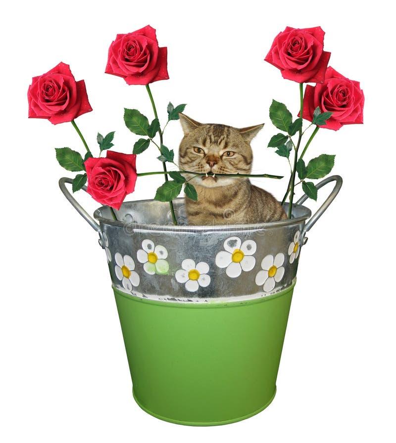 Gato con una rosa en un cubo imágenes de archivo libres de regalías